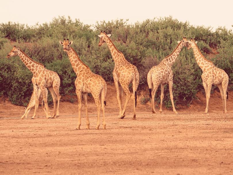 il deserto del Kalahari in Namibia: ecco cosa vedere