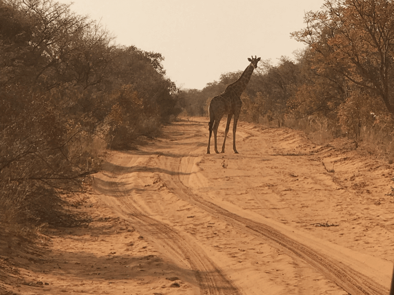 namibia on the road